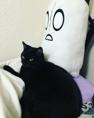 a black cat curled up and purring in front of a large plush napstablook from undertale